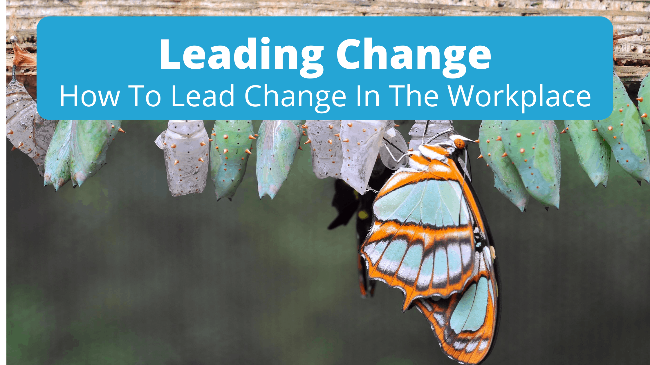 image leading change banner